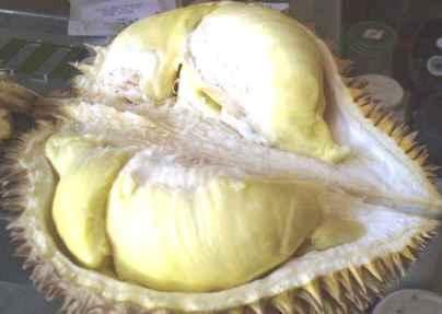 Buah Durian - Durio zibethinus